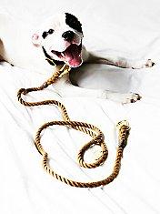 Natural Rope Leash